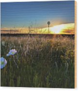 Morning On The Grasslands Wood Print
