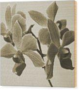 Morning Orchid Wood Print by Ben and Raisa Gertsberg