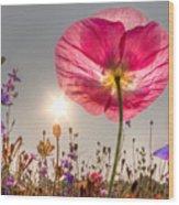 Morning Pink Wood Print