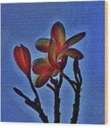 Morning Plumeria Wood Print