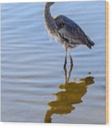 Morning Reflections Of A Great Blue Heron Wood Print