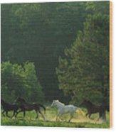 Morning Romp Wood Print