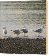 Morning Seagulls Wood Print