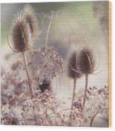 Morning Softness. Wild Grass Wood Print