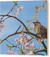Morning Song Sparrow Wood Print