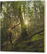 Morning Stroll In The Forest Wood Print