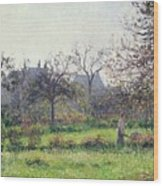 Morning Sun Wood Print by Camille Pissarro