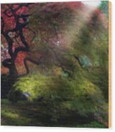 Morning Sun Rays On Old Japanese Maple Tree In Fall Wood Print