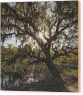 Morning Sun Through The Oak Wood Print