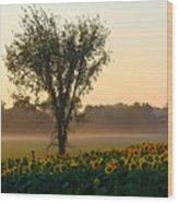 Morning Sunflowers Wood Print
