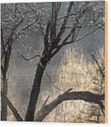 Morning Sunlight Mist Wood Print