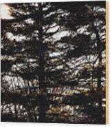 Morning Sunlight Through The Pines Wood Print