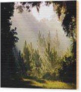 Morning Sunshine Wood Print