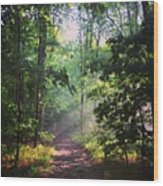 Morning Sunshine On The Appalachian Trail Wood Print