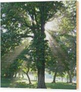 Morning Tree Wood Print