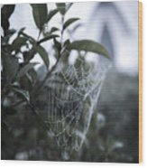Morning Web With Dew Wood Print