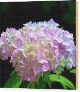 Morning Whisper - Hydrangea Wood Print