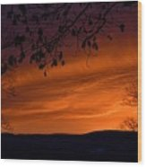 Morning's Glory Wood Print