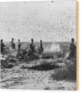 Morocco: Locusts, 1954 Wood Print
