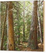 Morton Pines Wood Print