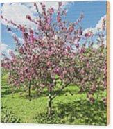 Moscow, Pink Cherries In Kolomenskoye Park Wood Print