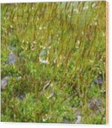 Moss And Drops Wood Print