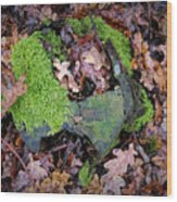 Moss And Leaves Wood Print