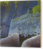 Moss And Rocks Wood Print by John Daly