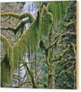 Moss At Munson Creek Wood Print