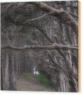 Moss Beach Trees 4191 Wood Print