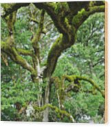 Moss Covered Arms Wood Print