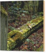 Moss Covered Fence Wood Print