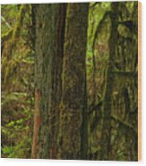 Moss Covered Giant Wood Print