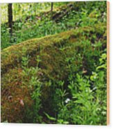 Moss Covered Log 2 Wood Print