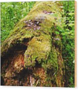 Moss Covered Log 3 Wood Print