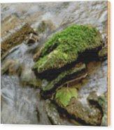 Moss Covered Rock Wood Print
