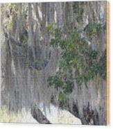 Moss Draped Tree Wood Print