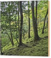 Moss Forest - Ginkakuji Temple - Japan Wood Print