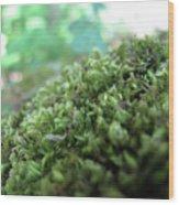 Moss I Wood Print