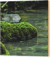 Moss In A Spring Wood Print
