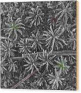Moss Near Mirror Lake Wood Print