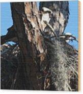 Moss Nest Wood Print