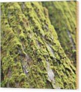 Moss On A Cedar Wood Print