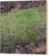 Moss On A Log Wood Print