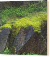Moss On Rocks Wood Print