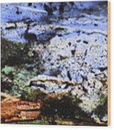Moss On Wood Wood Print