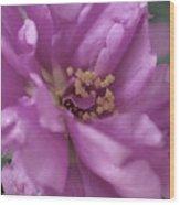 Moss Rose II Wood Print