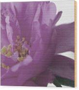 Moss Rose IIi Wood Print