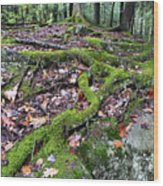 Moss Tree Roots Fall Color Wood Print