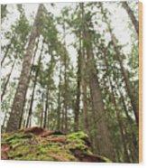 Moss Under The Cedars Wood Print